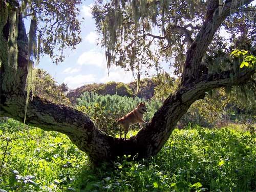 dog-in-tree.jpg