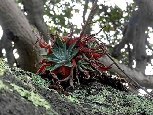epiphyte.jpg