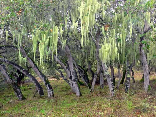 mossy oak grove