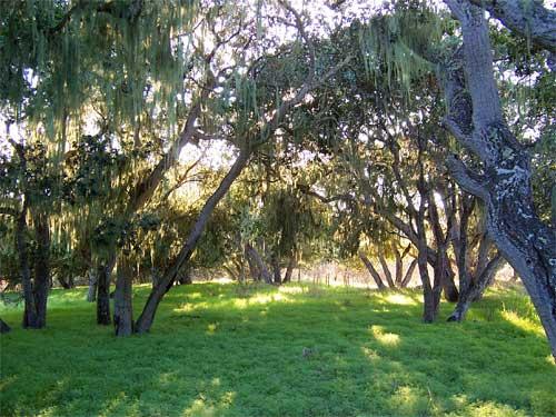 grove2.jpg