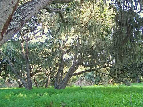 grove4.jpg