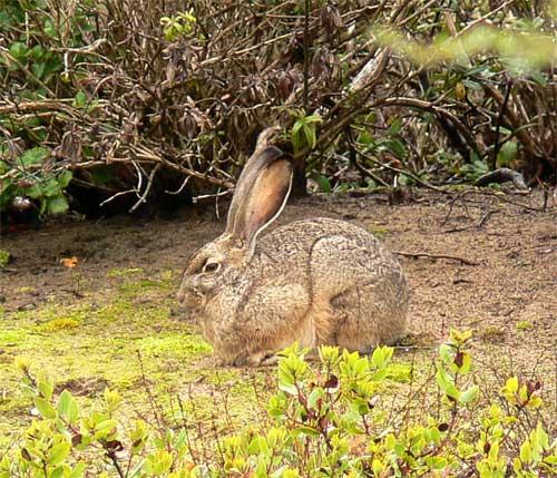 hare3.jpg