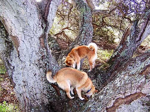 treedogs.jpg