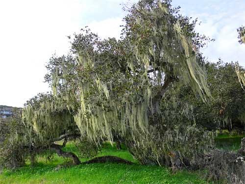 mossytree2.jpg