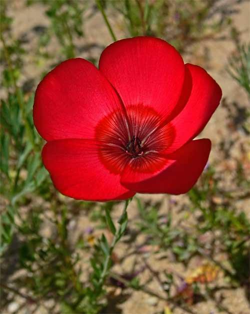 redflower3p1030797.jpg