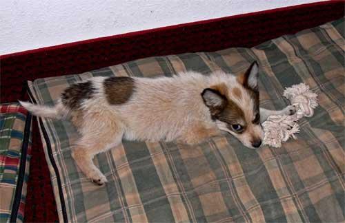 pup-w-toyp1040517.jpg