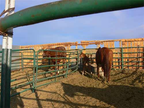 RR-foal1P1070153